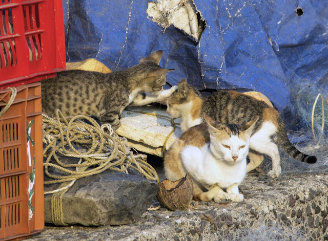 cat, crates, india, jetty, kittens, koliwada, mumbai, nets, street, streetphoto, worli,