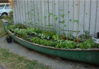 Gunakan perahu kayu bekas sebagai pot tanaman.