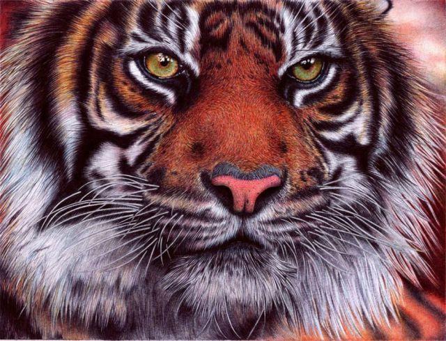 Desenhista consegue fazer desenhos com qualidade fotográfica usando caneta esferográfica