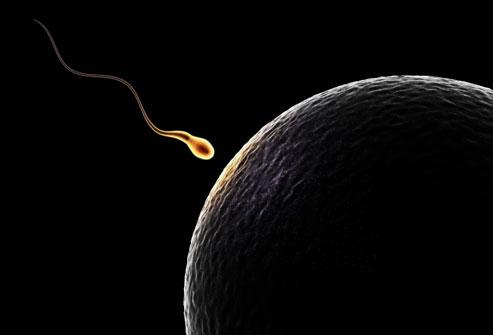 Mengatasi Masalah Gangguan Sperma
