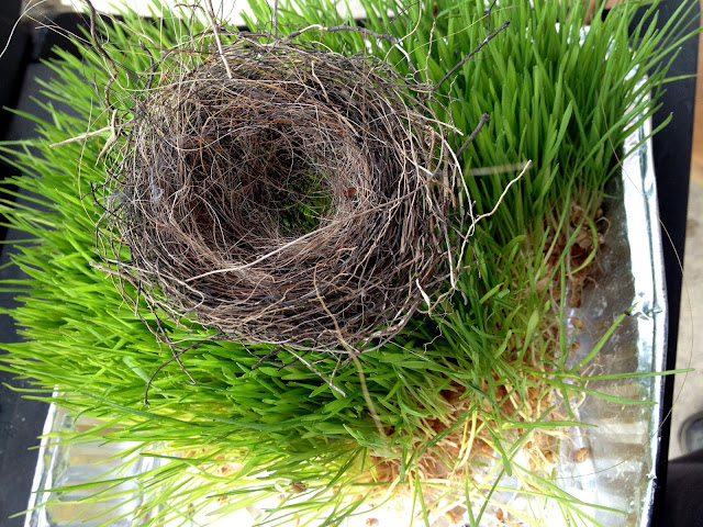 small bird nest made with horse hair