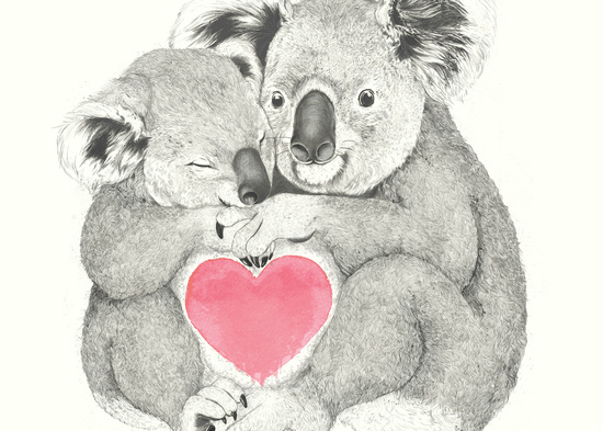 Koalas love hugs Laura Graves