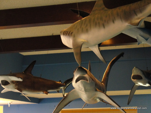 shark exhibit at Las Vegas Natural History Museum