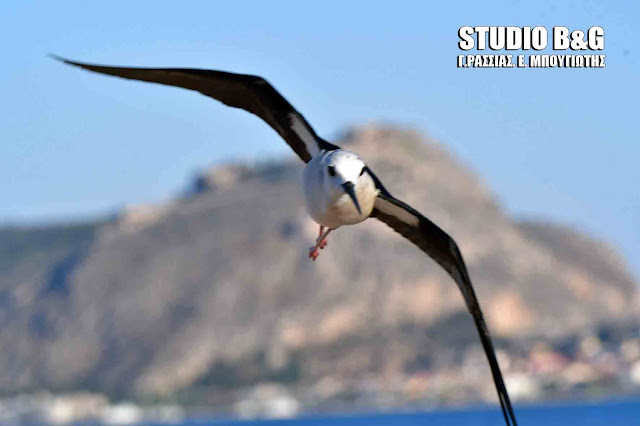 Η φωτογραφία της ημέρας: Πως βλέπουν τα πουλιά;