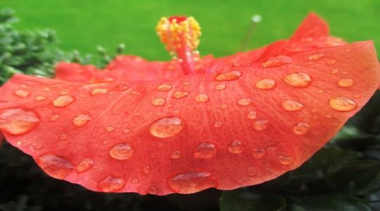 tanaman untuk membangkitkan aura