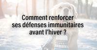 Comment renforcer ses défenses immunitaires avant l'hiver ?