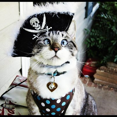 & Acting Cute Collections: Cross-eyed Cat Spanglesu0027 Halloween Costumes