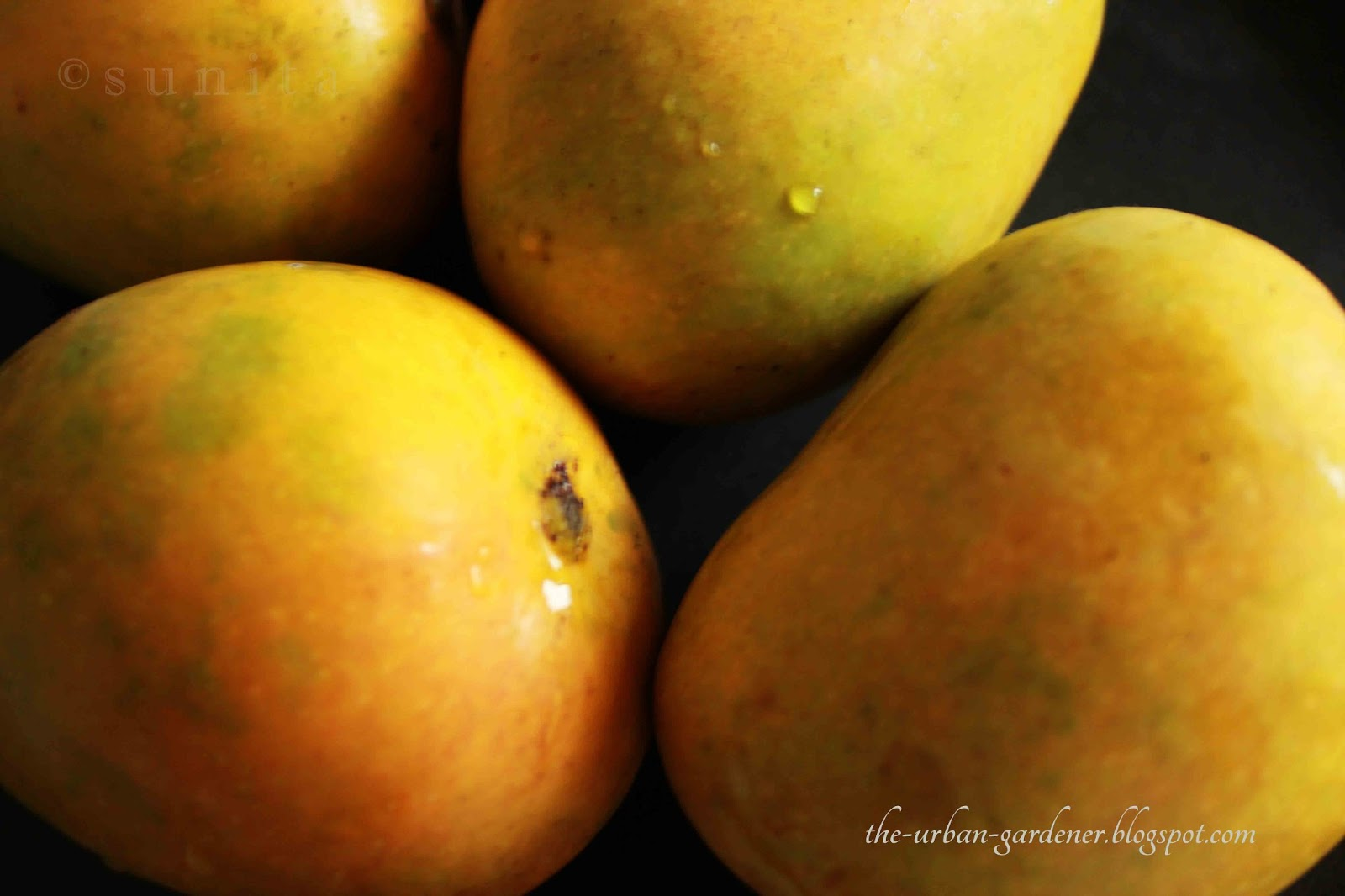 Delicious ripened mangoes on the beach10must watch - 3 part 2