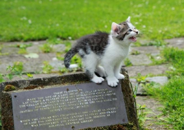 Surat Untuk Manusia, Dari Kucing Kecil Yang Kalian Buang