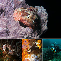 Underwater Photography Internship mosaic on macro 4