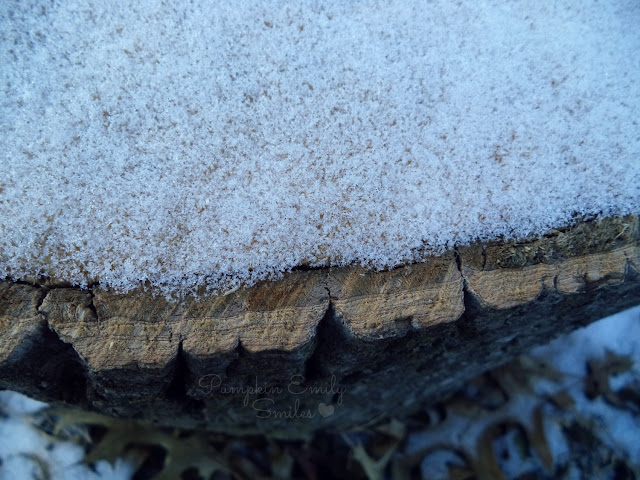 Snow on a tree log