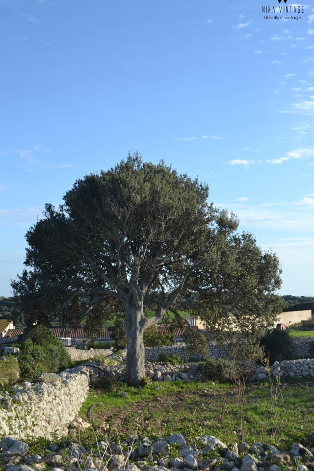 lugares especiales, Menorca, paisajes, arbol, fotografias