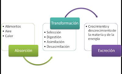Medicina en formula para calcular el metabolismo basal