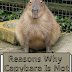 Reasons Why Capybara Is Not A Good Pet