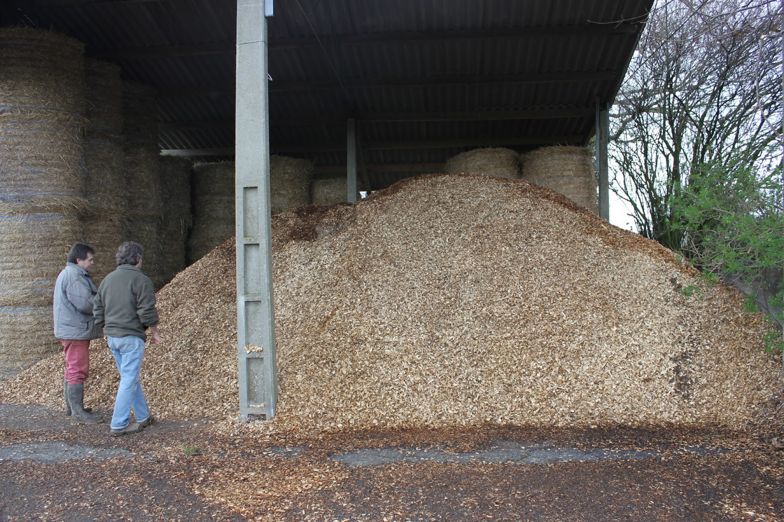 Chips drying prior to use in wood chip boiler