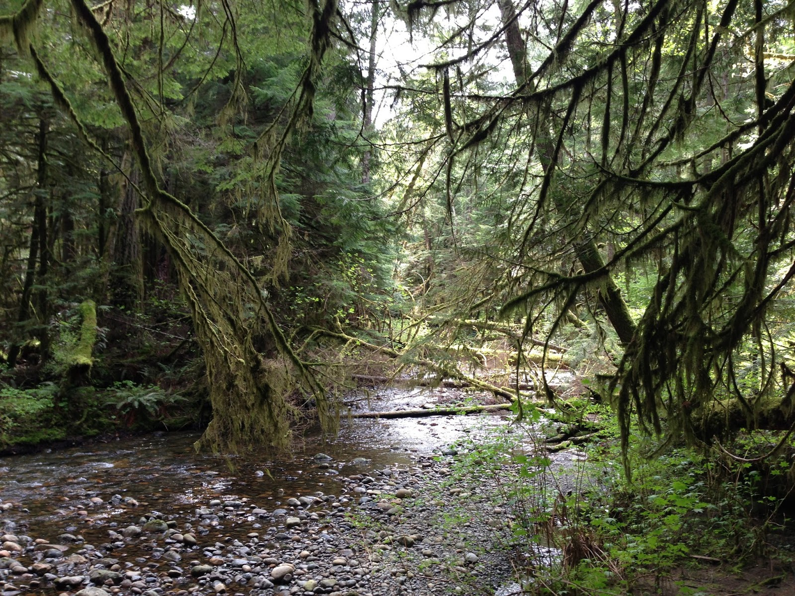 Explore The Beauty Of Caribbean: Walk-Hike-Bike-Explore Vancouver Island