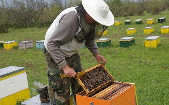 Έκλεψαν μελισσοκόμο στο Άργος - Τι πρέπει να προσέχουν