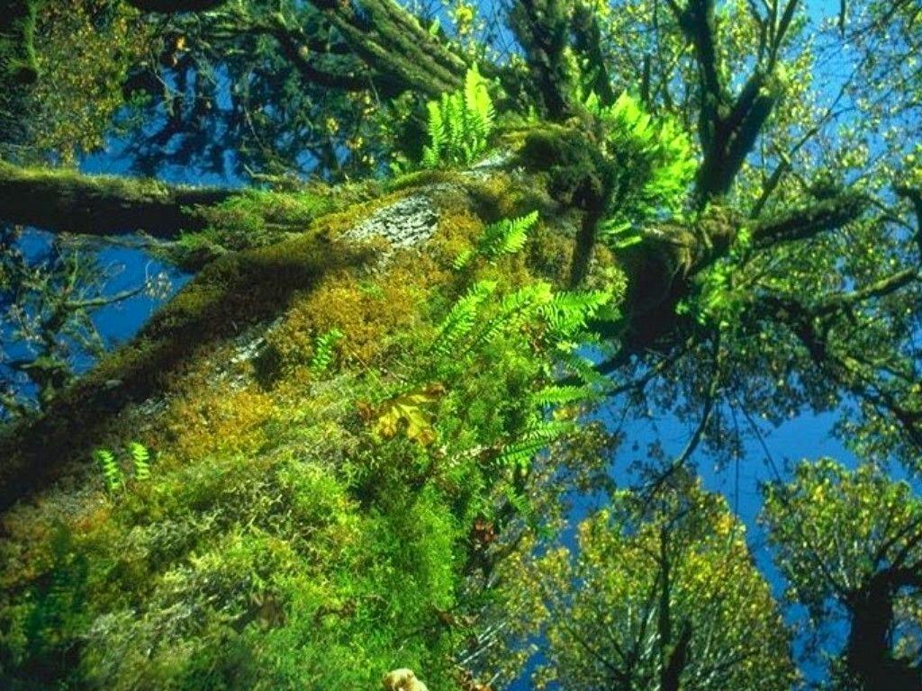 مناظر للطبيعه Nature Wallpapers 2