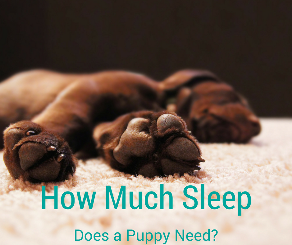 Bark City Doggy Daycare How Much Sleep Does A Puppy Need