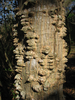 Poró Tree Trunk