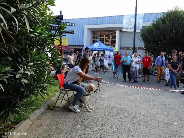 Τα σκυλιά του Κέντρου Σκύλων Οδηγών Ελλάδος στην 81η ΔΕΘ
