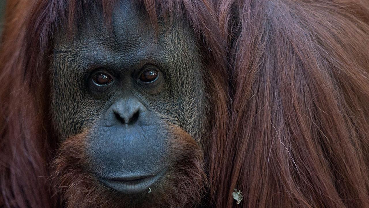 İtalya Bütün Hayvanların Sirklerde Kullanılmasını Yasakladı