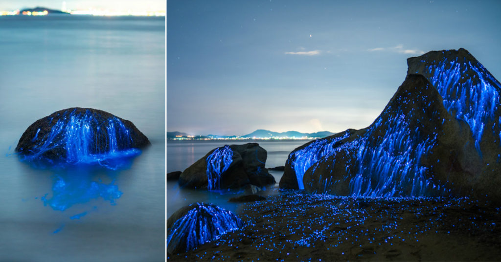 Mind-Blowing Pictures Of Bioluminescent Shrimp In Okayama, Japan