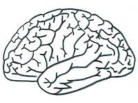 cerebro-colorear-plantilla-preescolar