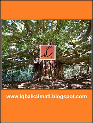 Banyan (Bargad) Tree Properties and Benefits in Urdu