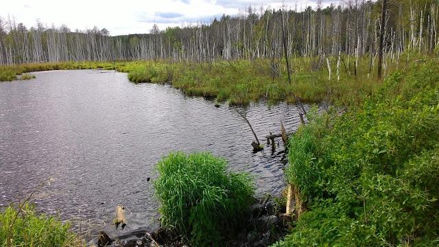 Заболоченная пойма реки Сугомак под Кыштымом