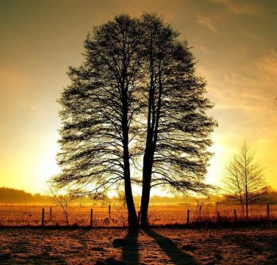 ağaç dalları