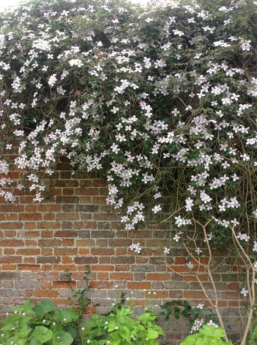 purple podded peas: 100 Flowers : On the wall – Wisteria ...