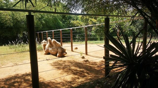 Achegue-se! Zoológico Salvador/BA - Ponto turístico