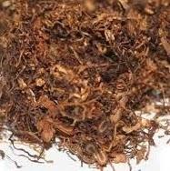 biopestisida dari tembakau untuk tanaman cabe