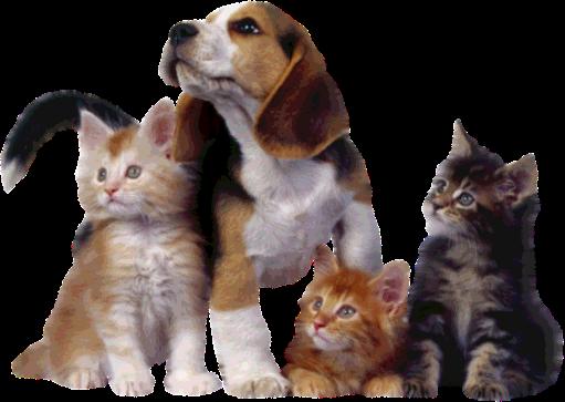 Zoom dise o y fotografia los perros mas listos para tus for Red transparente para gatos