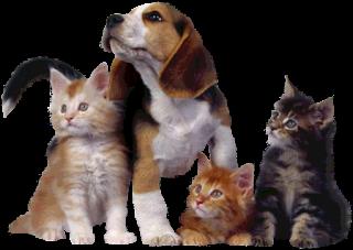 perros,cachorros,pets,mascotas,fondo transparente,png.gatos