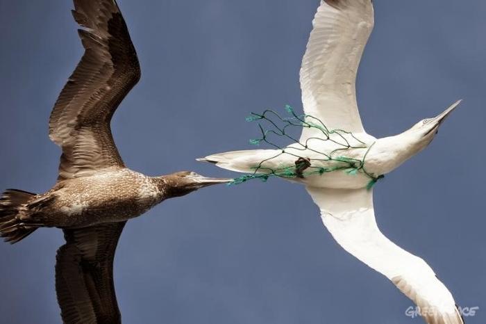 Ave com rede de pesca no pescoço