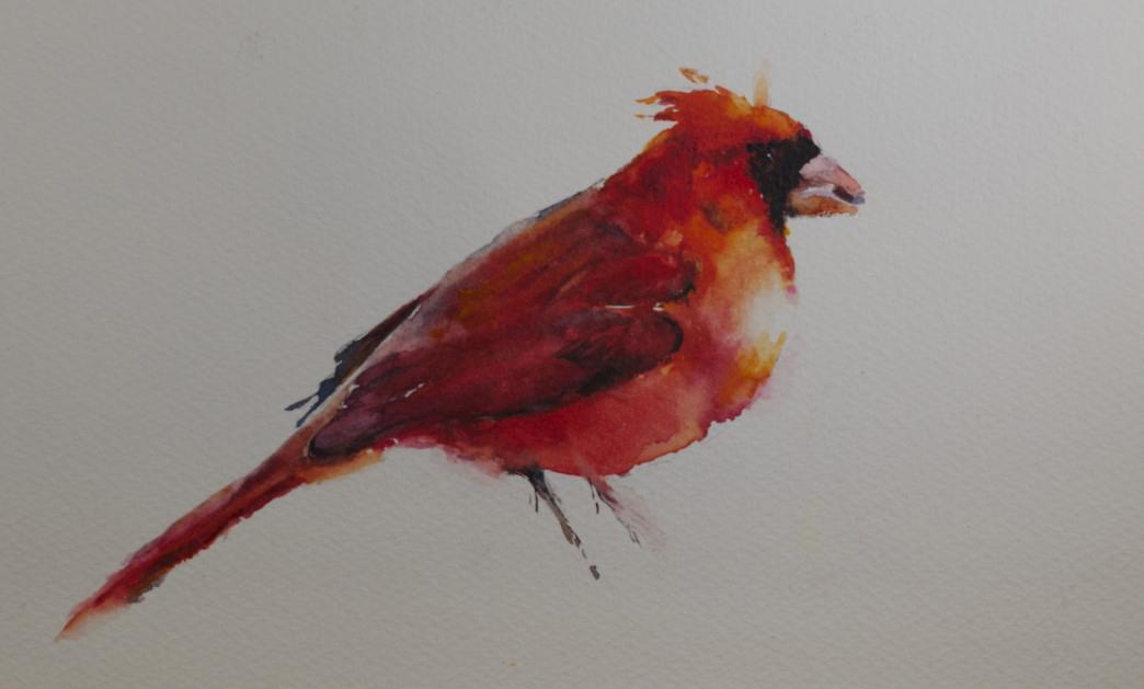 Watercolor Cardinal Tattoo: Sue ChurchGrant Daily Painting: Cardinal Watercolor