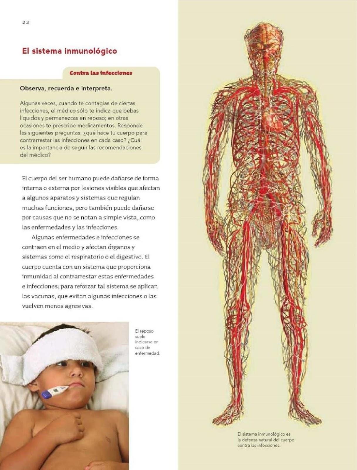 Coordinación y defensa del cuerpo humano - Bloque I - Tema
