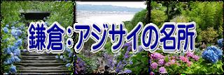 鎌倉アジサイの名所