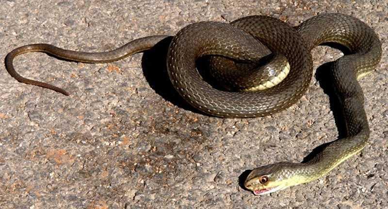 Γέμισε φίδια η Λάρισα-Τρομοκρατημένοι οι κάτοικοι