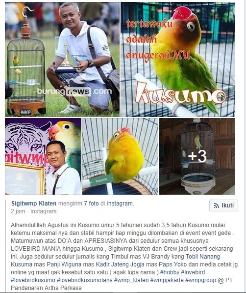 Lovebird Kusumo dan Om Sigit WMP Klaten