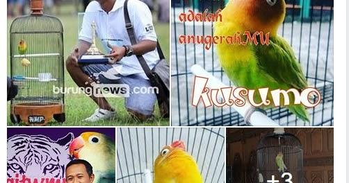 Download 88 Foto Gambar Burung Lovebird Ki Kusumo  Terbaik Gratis