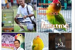 Lovebird Kusumo sedang ulang tahun ke 5, Agustus 2017