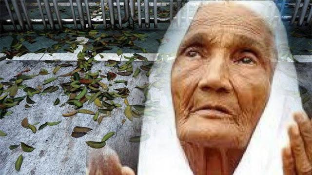 Nenek Pemungut Daun Ini Bershalawat Di Setiap Lembaran Daun Yang Diambilnya