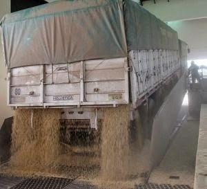 elasticidad de oferta del trigo