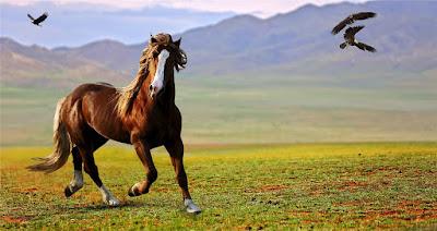 Horse - Rörelse för djurrätt