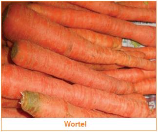 Kandungan dan Manfaat Wortel - Sayuran Wortel