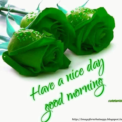 Good Morning Images for Best Wishes and Greetings