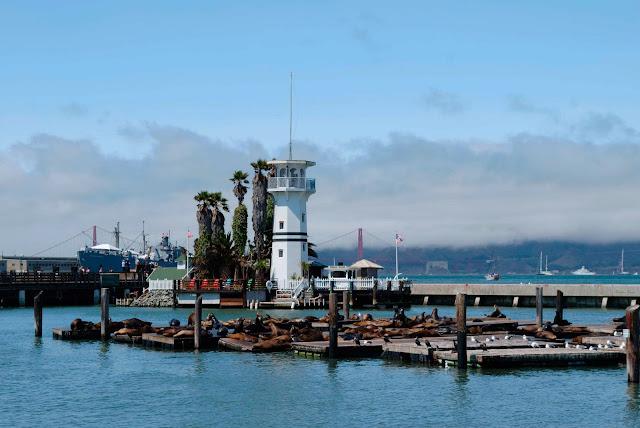 san francisco embarcadero pier 39 sea lions